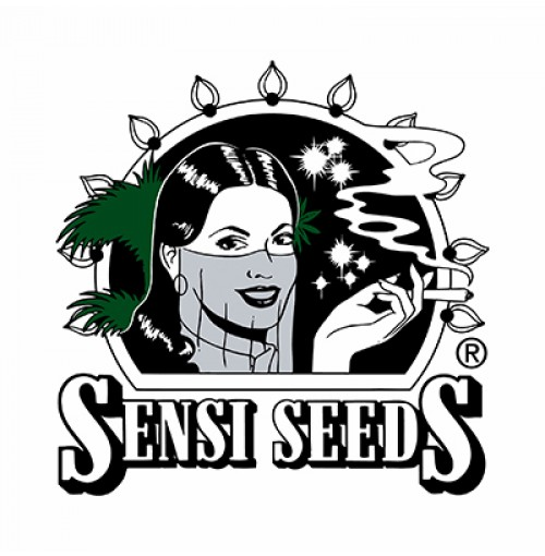 Sensi Seeds CBD Oil