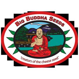 Big Buddha Seeds Feminised
