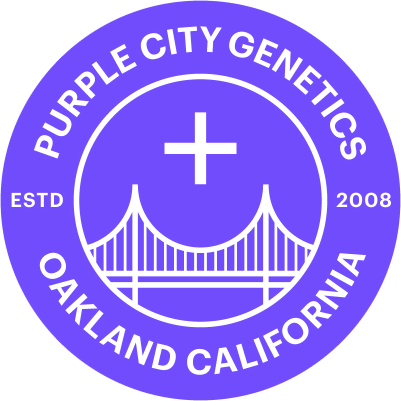 Purple City Genetics Autoflower